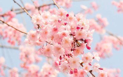 Détox de printemps et immunité
