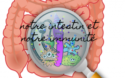 Notre intestin et notre immunité 💪
