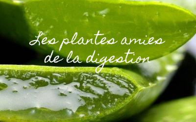 Les plantes amies de la digestion 🌿